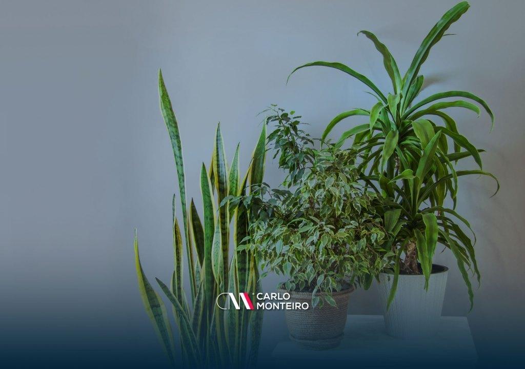 Imagem da notícia: - Como cuidar do nosso jardim interior na primavera!